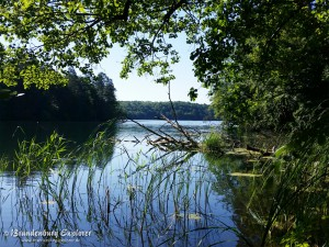 150702_Stechlinsee_4
