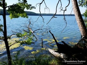 150702_Stechlinsee_6